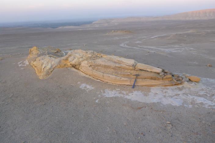 Ingemmet y Sociedad Geológica del Perú expondrán fósil de reptil marino prehistórico hallado en Lima