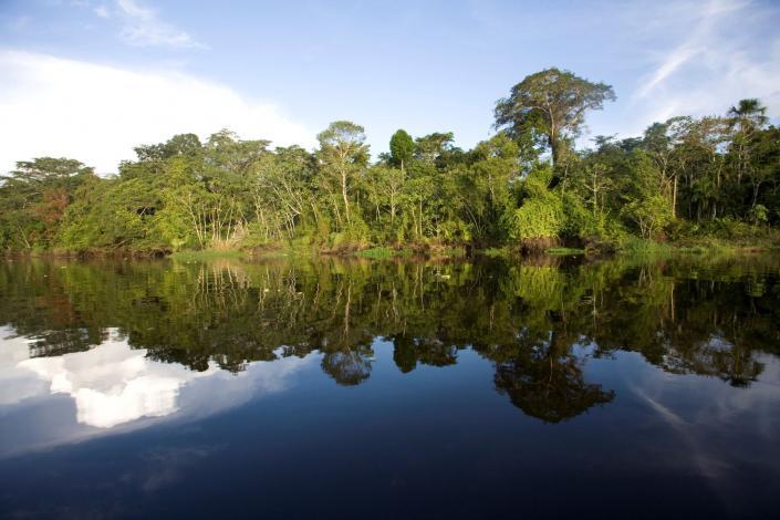 Implementarán proyecto para recuperar 380,500 hectáreas de bosques degradados